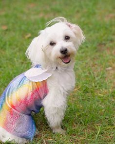 Doggy Dress-up