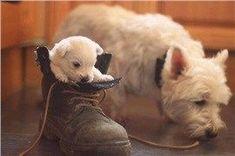 CoolPetZ | Social Pet Network Yavru köpeğiniz ayakkabılara tuvaletini yapıyorsa ne yapmalı? #tuvalet #köpek #CoolPetZ