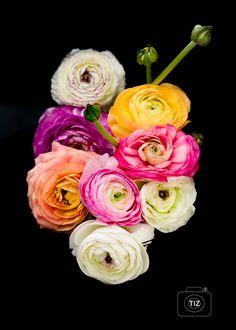In mooi contrast een boeket ranonkels vastgelegd. Bullet Journal, Rose, Plants, Flowers, Pink, Plant, Roses, Planets