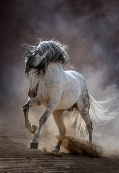 - Art Of Equitation Cute Horses, Pretty Horses, Horse Love, Horse Photos, Horse Pictures, All Pictures, Most Beautiful Horses, Animals Beautiful, Wilde Mustangs