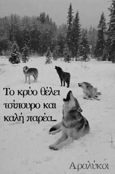 9d0c14d5f18efbcfea8d47135bb1a136--alpha-wolf-black-and-white.jpg (236×357)