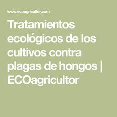 Tratamientos ecológicos de los cultivos contra plagas de hongos   ECOagricultor