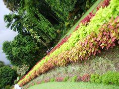 Botanical Gardens, Flowers, Plants, Flora, Royal Icing Flowers, Floral, Plant, Florals, Flower