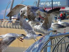 """Blackpool,Lancashire. Traditonal """"kiss me quick"""" Northern city. Great campsites and great for family's."""