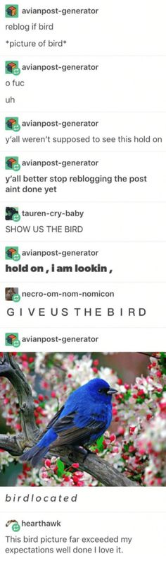 This is funny but idk why. Just like everything else I post. Tumblr Stuff, Tumblr Posts, Bird Pictures, Funny Pictures, Funny Cute, The Funny, Tumblr Funny, Funny Memes, Ironic Memes