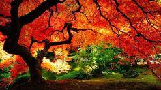 O outono (AO 1945: Outono) é a estação do ano que sucede ao Verão e antecede oInverno. É caracterizado por queda na temperatura, e pelo amarelar das folhas dasárvores, que indica a passagem de estações (excepto nas regiões próximas ao equador).