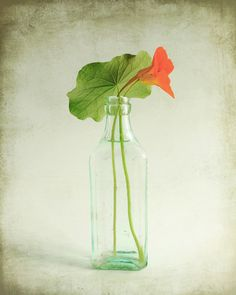 A simple minimal still life of a single flower and leaf of nasturtium. TITLE ~ Nasturtium SIZES ~ 8x10 - 11x14 - 16x20 OPTIONS ✽ To see other