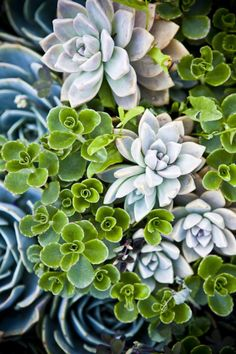 Hens and chicks + sedum + assorted other succulents = LOVE... Maybe I won't kill these, need to plant in my garden box