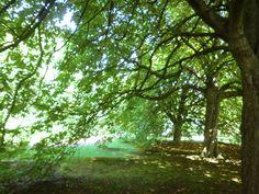 A magical view under giant trees in Edinburgh Botantic Garden summer 2014