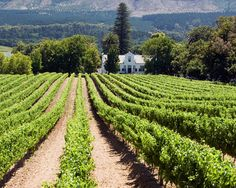 South Africa Wine Tours - South Africa Winery Tour | Destination360