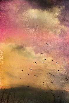 Orchid Twilight | Jem