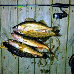 Cotswold Aquarius Trident 13ft 4//5 Carp Fishing Rod Holdall Woodland Camo NEW