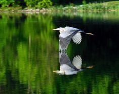 Centennial Lake, Columbia Maryland