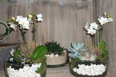 Weiße, geschmückte Orchideen