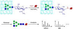 #ACA: Solid-phase reductive amination for glycomic analysis #MassSpec