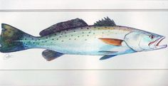 Speckled Trout Art | Speckled Trout Painting