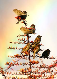 ali shokri    sky bird nature tree xmas    Iran, Tabriz, Shahgooli Park