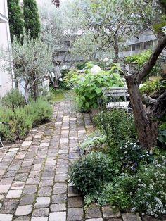 オリーブに囲まれたお庭 - 宿根草のお店「ワイズペレニアル」のブログ