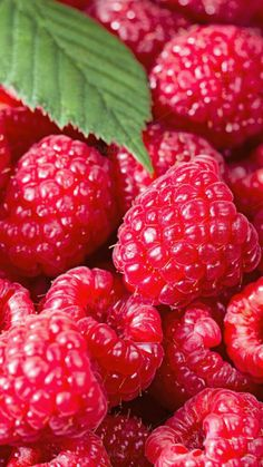 Fruit Photography Close Up Healthy 59 Ideas For 2019 Colorful Fruit, Red Fruit, Fruit Art, Fruit And Veg, Fruits And Vegetables, Photo Fruit, Food Photo, Raspberry Recipes, Raspberry Fruit