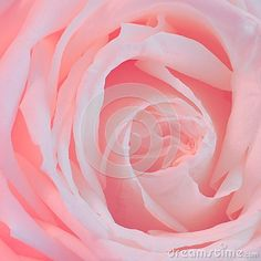 Pink Rose Background - Flower Stock Photos - Download From Over 42 Million High Quality Stock Photos, Images, Vectors. Sign up for FREE today. Image: 38444804