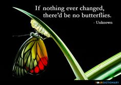 If nothing ever changed, there'd be no butterflies. - Unknown Quote