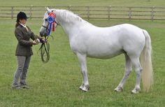 The Connla Stud, Connemara pony stud