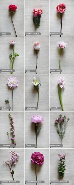 Pink wedding Flowers - dahlia, larkspur, Dutch hydrangea, Dutch tulip, garden blossom, garden rose, rose, grafted cactus, helleborus, hyacinth, peony, ranunculus, succulent blossom, and wax flower.