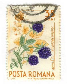 Gorgeous vintage stamp