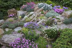 В состав смеси «Сказочный рокарий» входят многолетние стелющиеся растения для создания каменистых ландшафтных композиций. Среди них армерия альпийская, аттенария двудомная (кошачья лапка), армерия приморская, вербейник монетчатый, дицентра, иберис, камнеломка, лапчтка, девясил мечелистный, смолка, кореопсис, колокольчик, гвоздика