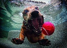 """Bildband """"Hunde unter Wasser"""": Unfreiwillig komisch sieht es aus,"""