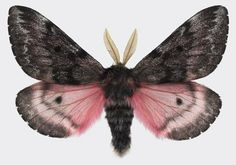 JAMES- what I like about this moth is that his feelers look more like a leaf!!! Less bug like
