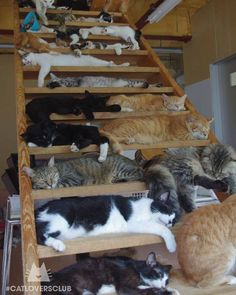 Crazy cat lady has found stairway to heaven - LOLcats is the best place to find and submit funny cat memes and other silly cat materials to share with the world. We find the funny cats that make… Cute Kittens, Cats And Kittens, Cool Cats, I Love Cats, Animals And Pets, Funny Animals, Cute Animals, Animals Images, Crazy Cat Lady