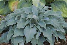 Phoenix Perennials - E-Newsletter