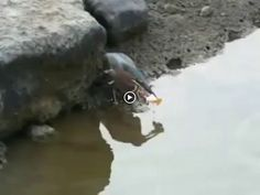 Se eu falar que vi um pássaro pescando com um pedaço de pão vocês vão dizer que eu to inventando. Então tá aí pra não dizer que sou mentiroso - Wandeir André - Google+