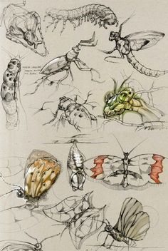 insect sketches - also has great examples of other organisms/things as drawing studies Animal Sketches, Animal Drawings, Art Drawings, Illustration Sketches, Drawing Sketches, Illustrations, Sketching, Sketchbook Inspiration, Art Sketchbook