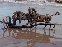 Horses made from Old Roots ~ Driftwood  ART: Google Image Result for http://cl.jroo.me/z3/Y/C/E/d/a.aaa-Unbelievable-Horses-made-of-.jpg