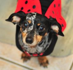 Pet Costume Contest on Saturday October 6 at 1pm! Food Trucks, Trick or Treating, and more!