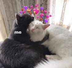 Cute Baby Cats, Cute Baby Animals, Kittens Cutest, Funny Animals, Cute Babies, Funny Cats, Cute Cat Memes, Cute Love Memes, Wallpaper Gatos