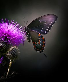 """thesensualstarfish: """" Butterflies With their short life spans Recognize that beauty Can even be found In the common weed ~The Sensual Starfish """""""