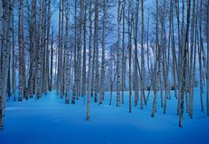 "When light shines on the canvas, the whole artwork is transformed yet again | ""Moonlit Birches"" by Peter Lik"