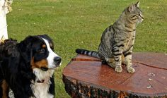 Can+Dogs+and+Cats+Mate?