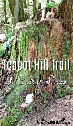 The Teapot Hill Trail is a fun 5-km hike in Cultus Lake Provincial Park, about an hour outside Vancouver, BC. Here's what our family thought of this trail.