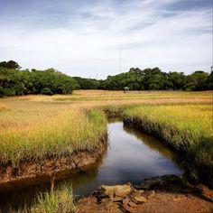 Peaceful view of #ShemCreek #marsh in #MountPleasant