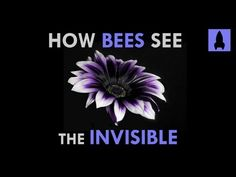 Electric Buzzaloo - How Bees See the Invisible | It's Okay to be Smart | PBS Digital Studios - YouTube