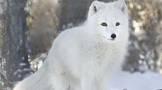 Petition · Ban Real Fur Sales on eBay · Change.org