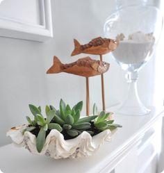 Clam shell Succulent Design Idea