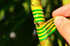 Altoirea de august a pomilor, în imagini pas cu pas