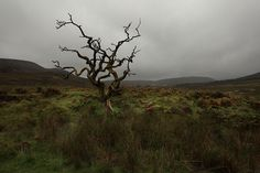 Highlands by Akos Major