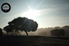 Es una de las regiones de mayor diversidad biológica de la península. Sierra Morena al norte y el Sistema Bético al sur. Bosque mediterráneo. Encina, alcornoque, pino, los pinsapo, olivo y el almendro como especies cultivadas. En las zonas más húmedas y de suelos ácidos las especies más abundantes son el roble y el alcornoque, y como especie cultivada destaca el eucalipto.