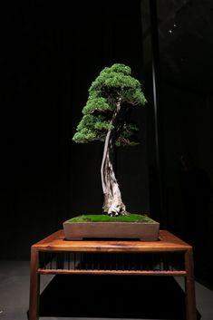 Bonsai, penjing, kusamono, suiseki and viewing stones Mini Zen Garden, Indoor Garden, Indoor Outdoor, Bonsai Art, Bonsai Garden, Bonsai Tree Types, Bonsai Trees, Spiritual Garden, Zen Garden Design
